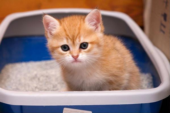 кошачий туалет