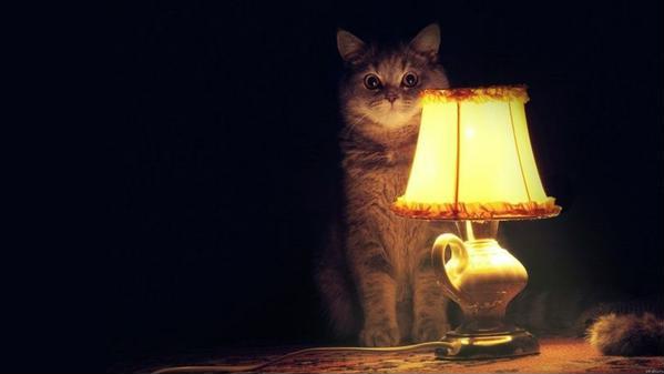 коты по ночам