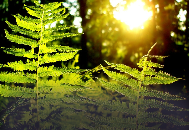 День летнего солнцестояния