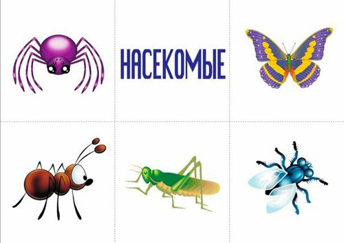 карточки для детей насекомые