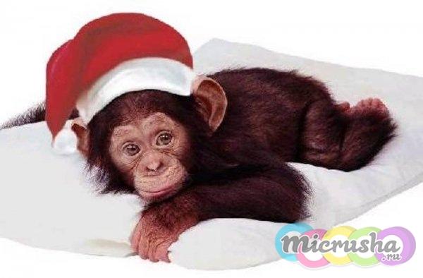 Новый год красной огненной обезьяны