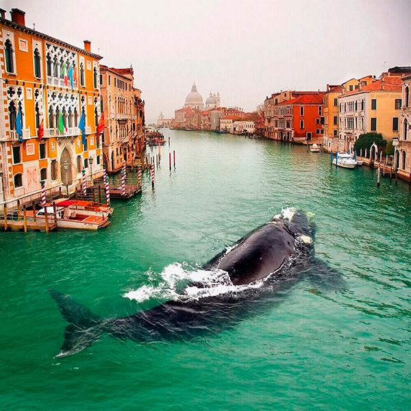 Кит заплыл в Венецию