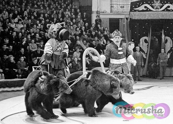 """медвежий цирк"" Валентина Филатова"