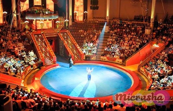 Схема зала - Изображение Московский цирк Никулина