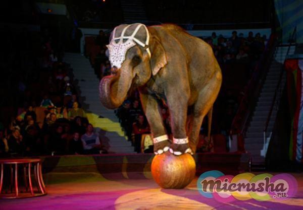Слон на шаре в Московском цирке