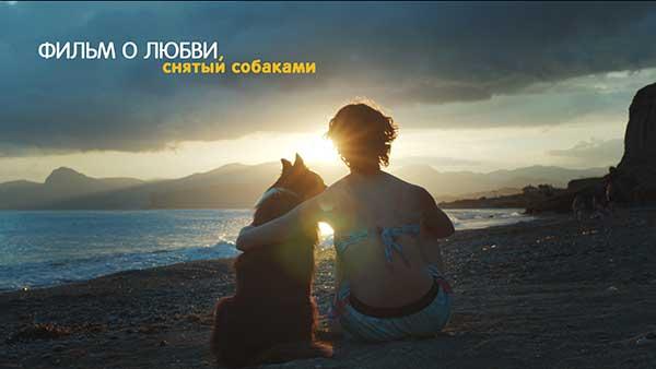 Фильм о любви, снятый собаками