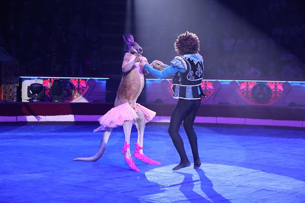 кенгуру в цирке