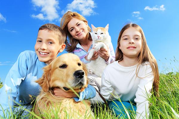 Плюсы домашних животных
