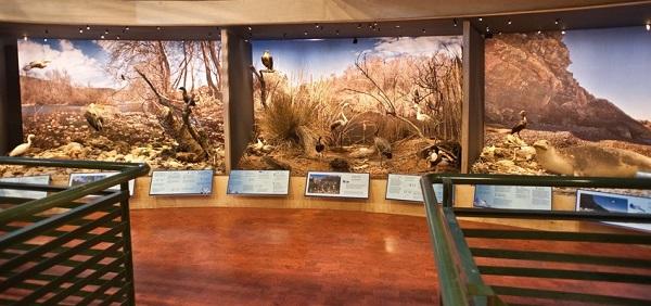 Музей Естественной истории Крит