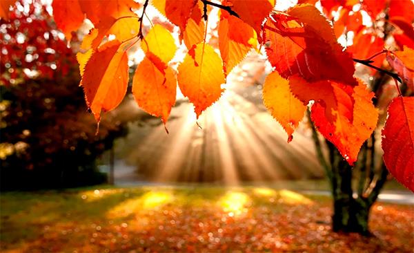 Фотоконкурс Осенняя пора
