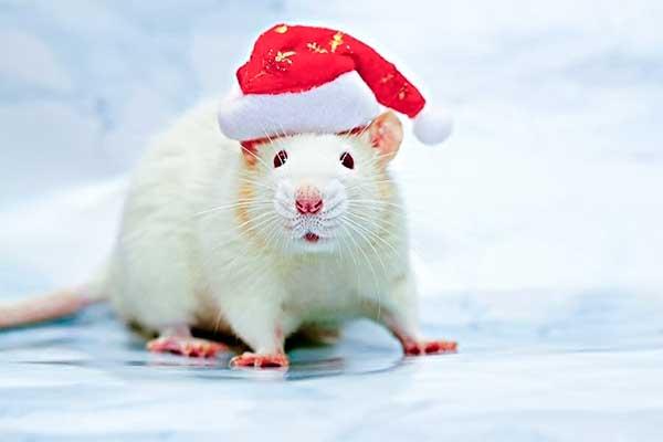 Новый 2020 год - год Белой Металлической Крысы