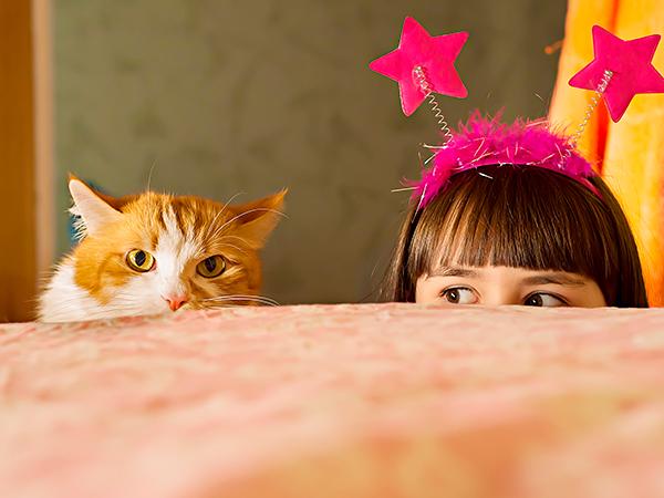 чем заняться с кошкой во время самоизоляции