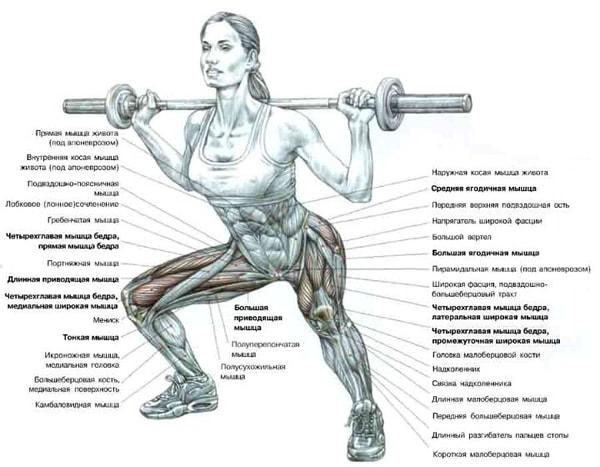 Комплекс упражнений для круговой функциональной тренировки