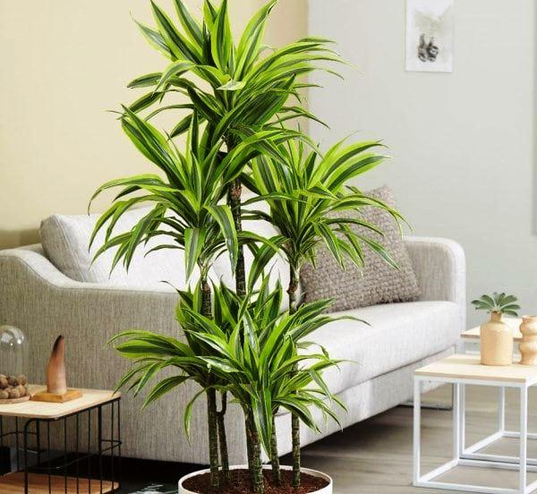 Самые неприхотливые комнатные растения. ТОП 5